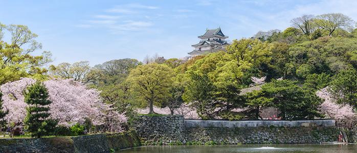 満開の桜と和歌山城の天守閣