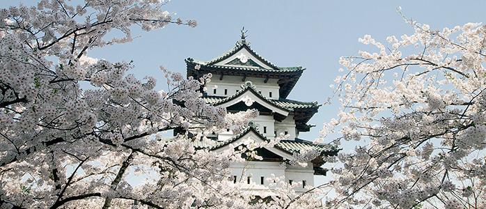 弘前城の天守閣と満開の桜